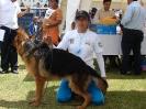 Exposición de Canes