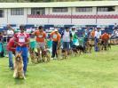 V Exposición Internacional de perros Pastores Alemanes